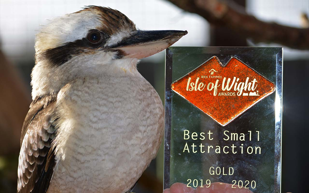 Kookaburra sitting next to a gold award